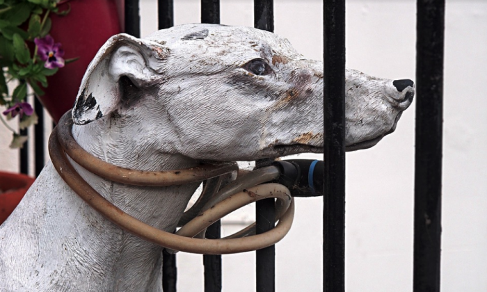 """Congressmen Vern Buchanan and Ted Deutch on Jan. 23, 2019, introduced the """"Preventing Animal Cruelty and Torture (PACT) Act"""" to outlaw and make it easier to prosecute those involved in the gruesome killing of animals. (Pixabay image)"""
