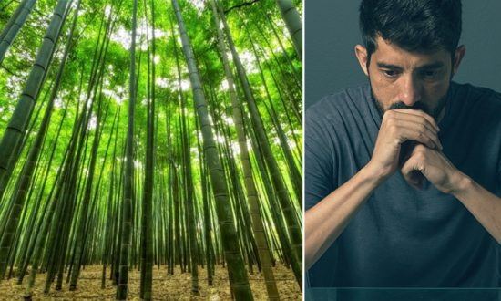 Depressed Man Struggling Not to Give Up in Life Finds Answer in a Bamboo Forest