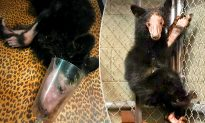 Bear Cub Saved on Valentine's Day By Hikers is Lucky to Be Alive