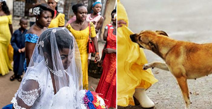 Dog Bites Strange Girl at Wedding. Moments Later, Villagers Shook by Massive Explosion