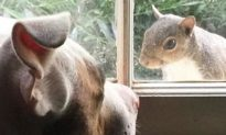 Rescued Squirrel Surprises Family With a Special Gift Before She Returns to the Wild