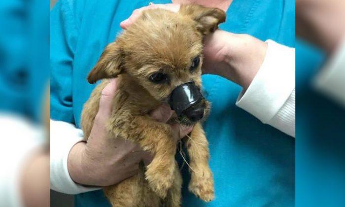 (Photo courtesy ofGriffith Animal Hospital)