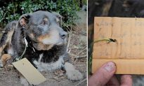 Old Dog Returns Home With a Note Attached on His Collar Praising His Heroic Deed