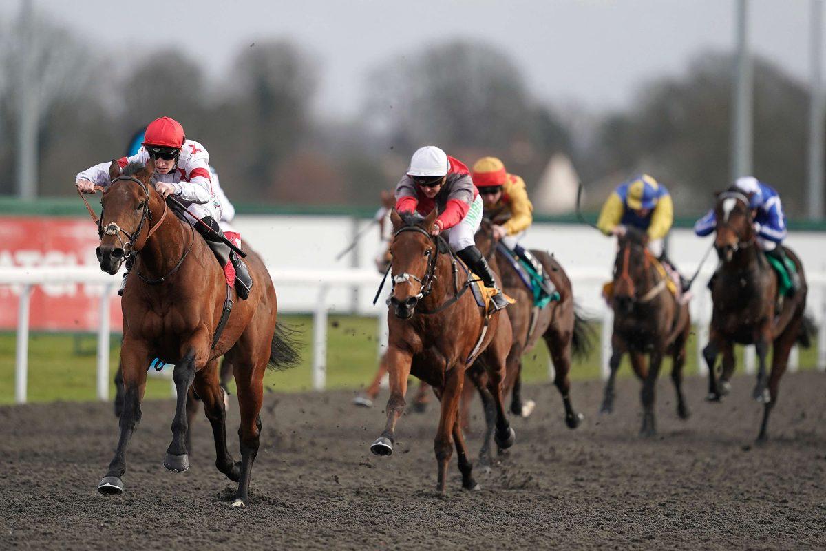 Horses race at Kempton Park Racecourse