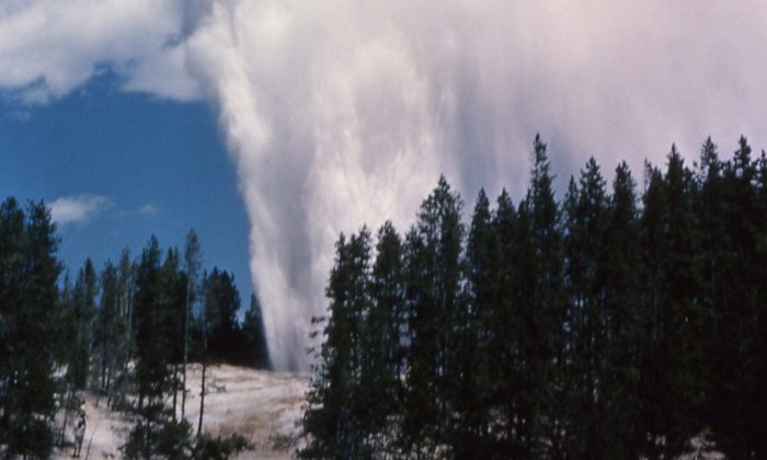 An undated photo shows Yellowstone's Steamboat Geyser (National Park Service)