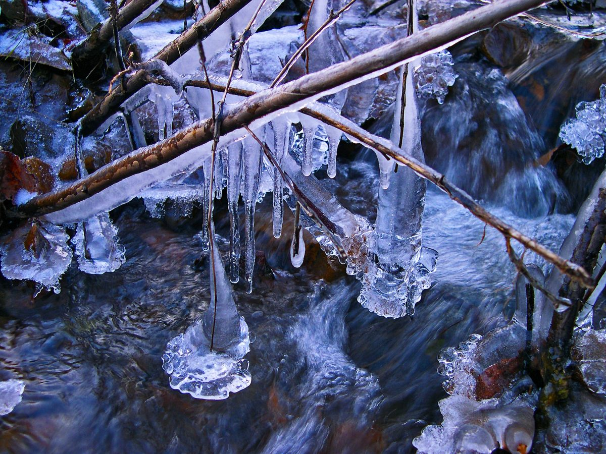 Ice water and branches