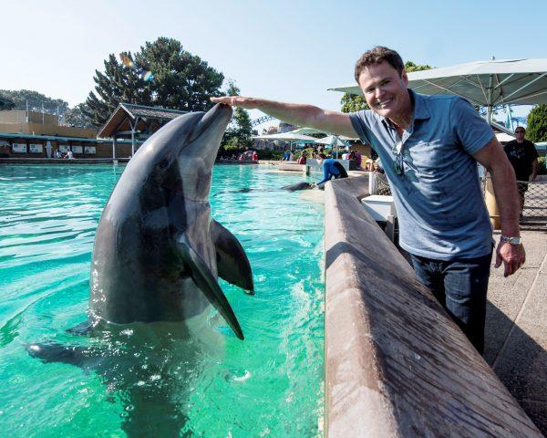 Dolphin in seaworld