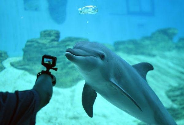 Dolphins seaworld arizona