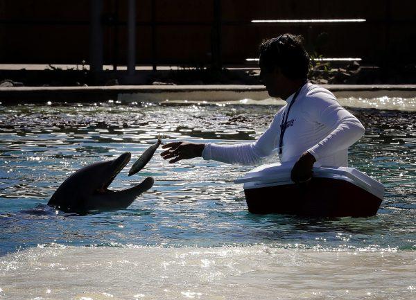 dolphin at Dolphinaris Arizona 1