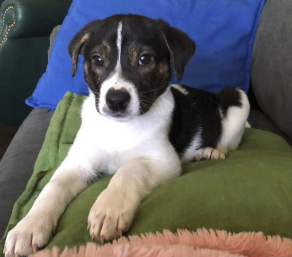 Murray, a mixed-breed dog