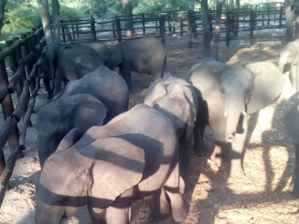 baby elephants at a national park in zimbabwe
