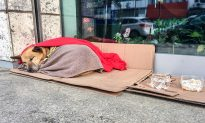 Woman's Heart Breaks Seeing Stray Dog Shivering in the Cold, So She Gives Up Her Scarf