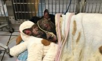 Dog Set on Fire After Being Tied to Pole Dies, Animal Control Says
