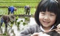 Talking' Rice Grain Uses Its Tough Life to Convince Little Girl Not to Waste Food