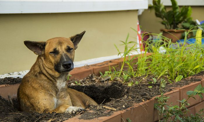Homeless Dog Digs Hole in a Grave to Make a 'Home' for Her Litter of Puppies