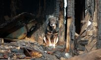 Dog Saves Family from Devastating Fire That Burned Home to Ground