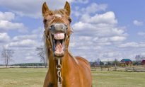 Dad bursts out laughing when he sees face of the horse daughter's taking selfies with