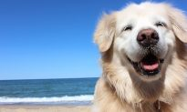 Blind Therapy Dog Teaches People to 'Live the Moment' With His Contagious Positivity