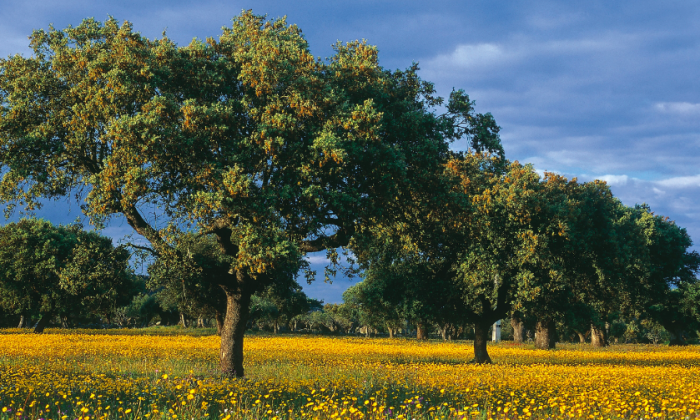 A stock photo of trees (Turismo Alentejo)