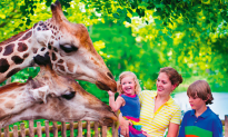 Family Tips: Taking Your Crew to the Zoo