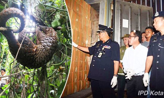 Customs Make Largest-Ever Seizure of World's Most Trafficked Animal in Warehouse Freezer