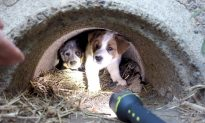 Man Promises Dead Stray Dog That He Would Save Her Three Puppies, and He Did