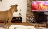 4-Month-Old Pup Watching 'The Lion King' Turns Emotional When Mufasa Passes Away
