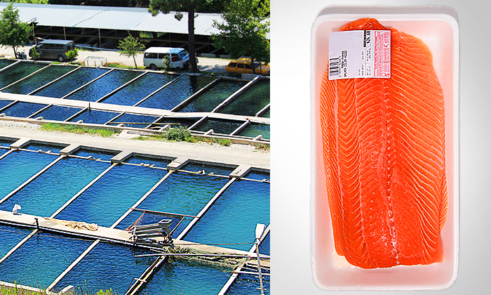 Farmed Salmon: Does Cheaper Fish Come With Increased Risk of Cancer?
