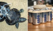 Eco-Conscious Brewery Makes Edible Six-Pack Ring That Feeds Marine Life Instead of Killing It
