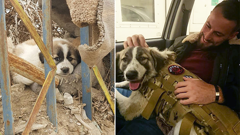 Dog Travels 3,000 Miles to Reunite with British Army Veteran Who Saved Her in War-Torn Syria