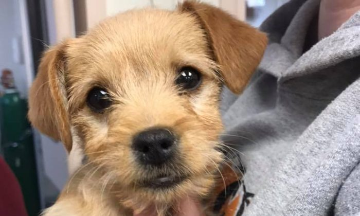 6-Pound Puppy Dies After Eating Almost 50 Short Ribs