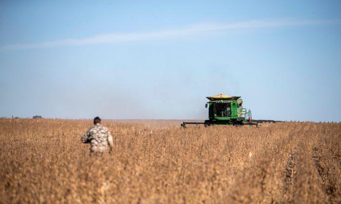 A farmer walks in a soya bean field toward the combine harvester near Bothaville, South Africa, on May 16, 2018. (Wikis De Wet/AFP/Getty Images)