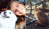 Neighbor's Cat Comes Over Every Day Looking for Best-Friend Dog That Passed Away