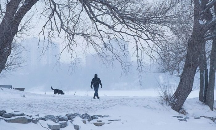 A man walks a dog in a snow covered park in Kingston, Ontario, on January 30, 2019.       (Photo by LARS HAGBERG/AFP/Getty Images)