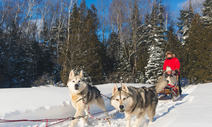 Dog sleds have been used for transportation in the far north for generations. (E. Boisvert/Tourisme Mauricie)
