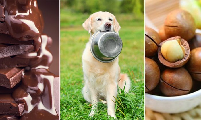 Did you know these 10 foods are dangerous and toxic to your pet?