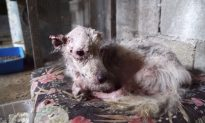 Pitiable Pooch Rescued from 'a Dungeon' Undergoes Unrecognizable Transformation