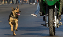 Drunk Motorcyclist and Dog Locked in 30-Minute Confrontation