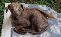Street Dog Was All Skin and Bones Until Rescuer Found It and Is Unrecognizable Now