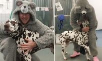 Injured Dog Refuses to Let Vet Get Close Until He Puts on a Giant Mouse Onesie