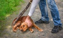 New Bill to Protect Our Animals Could See Abusers Get 7 Years Behind Bars