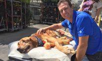 Dying Dog Goes for Wagon Rides Around Town to Lift His Spirit