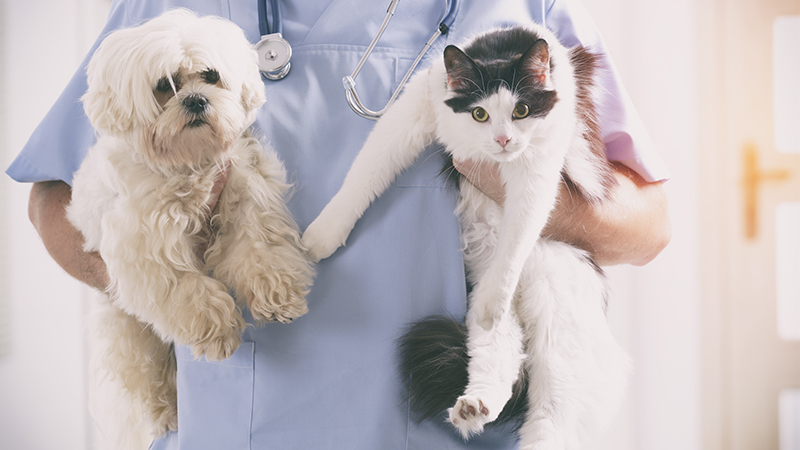 'Comfort' Animals at Veterinary Clinics Provide Adorable Comfort to Worried Pets