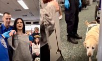 Guide Dog Shows What He Does to Help Her Owner Through Airport Security Smoothly