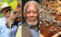 Morgan Freeman Turns His 124-Acre Ranch into a 'Bee Sanctuary' to Save Honeybees