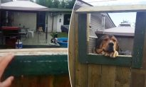 Dog-Loving Lady Can't Have a Pet in Rental Property, so Neighbor Devises Genius Plan