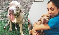 Dog with '2 Mouths' Looks Like from Science Fiction Film, Finds a Forever Loving Home