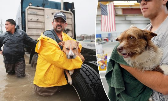 Florida Bill Means Fines or Jail Time for People Who Abandon Pets During Hurricanes