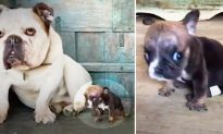 Special-Needs Pup Once the Size of Coke Can Is Now a 'Sassy Little Guy' After Foster Care