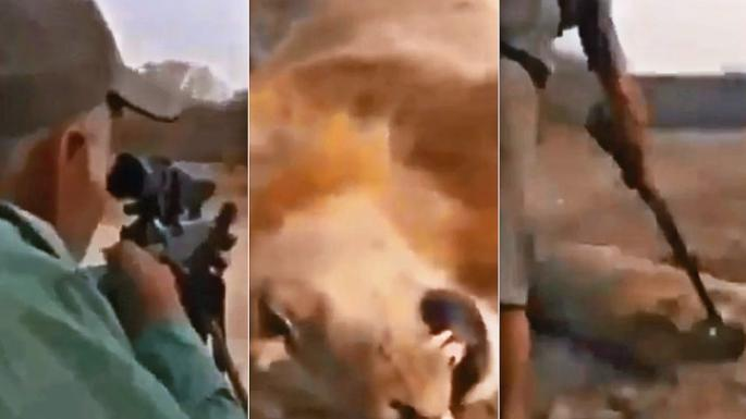 A hunter seen shooting a sleeping lion in a viral video that has sparked outrage has allegedly  been identified as Guy Gorney, a known champion of the controversial practice of trophy hunting. (@Protect_Wildlife/Twitter)